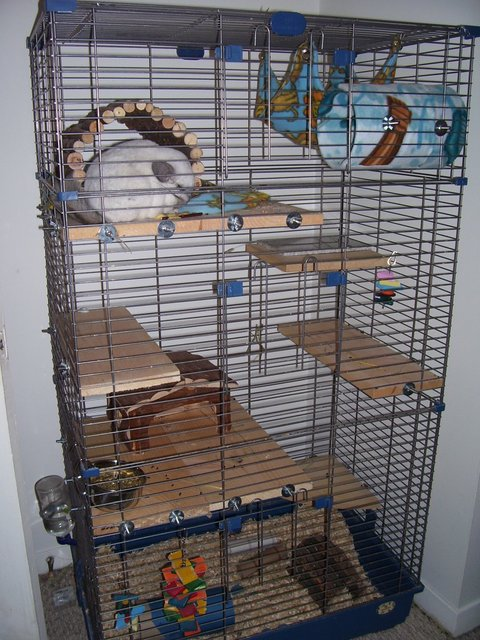 Owning a Chinchilla - Your Chinchillas Cage